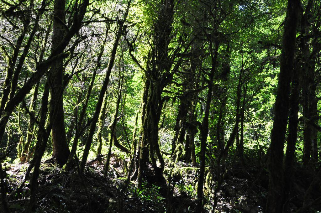Конец зоны рекреации. Тропа окружена густым лесом