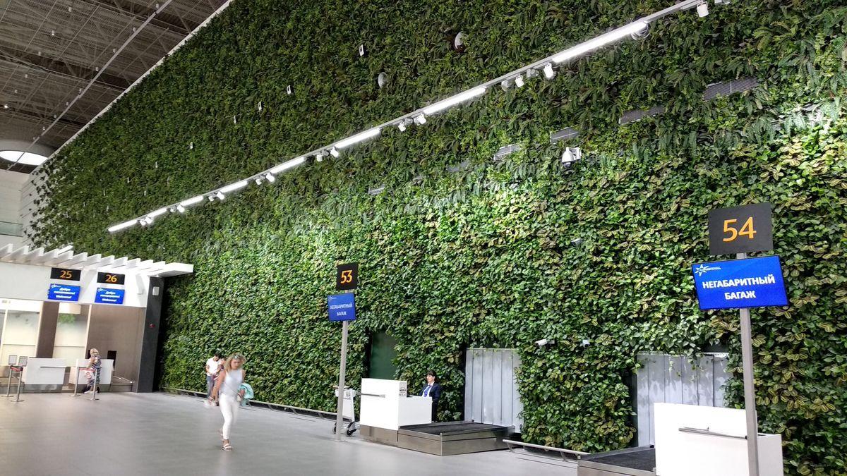 Зеленая стена. Аэропорт Симферополь
